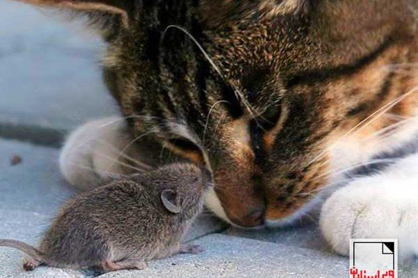گربه و موش-«ویراسـتاران»