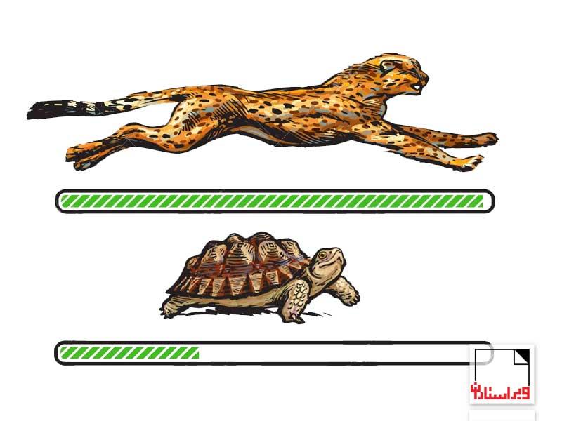 یوزپلنگ یا لاکپشت-ویراستاران